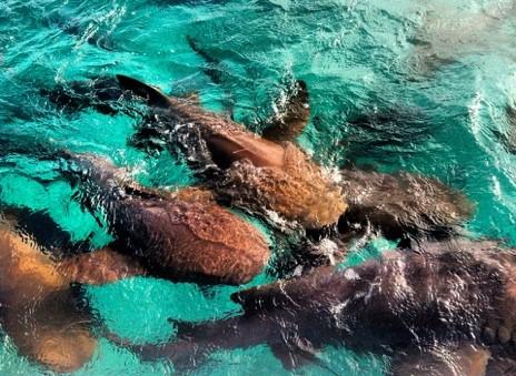 Sharks on a blue sea